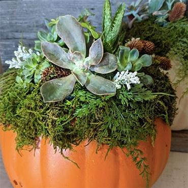 Succulents in a Pumpkin Centerpiece
